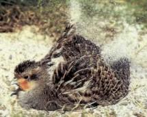 Vogel im Feld